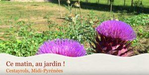 Le jardin de Bernard Gisquet