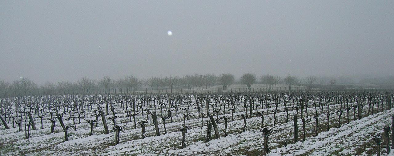 L'hiver, la neige sur les vignes de Cestayrols